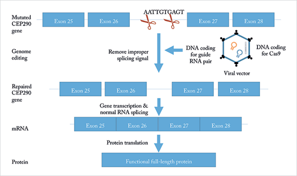 Gene Editing: The Next Frontier in Ophthalmology